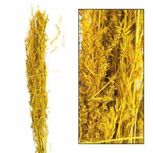 Alfonso grass
