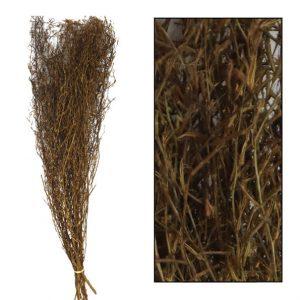Chili grass bruin