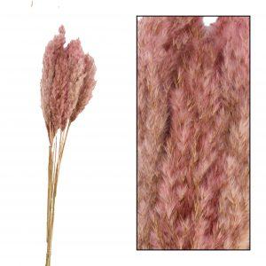 Roze pluimen